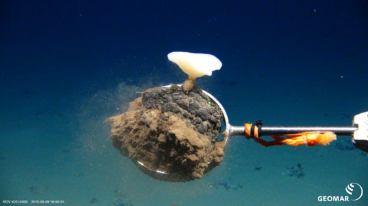 Deep sea nodule with sponge