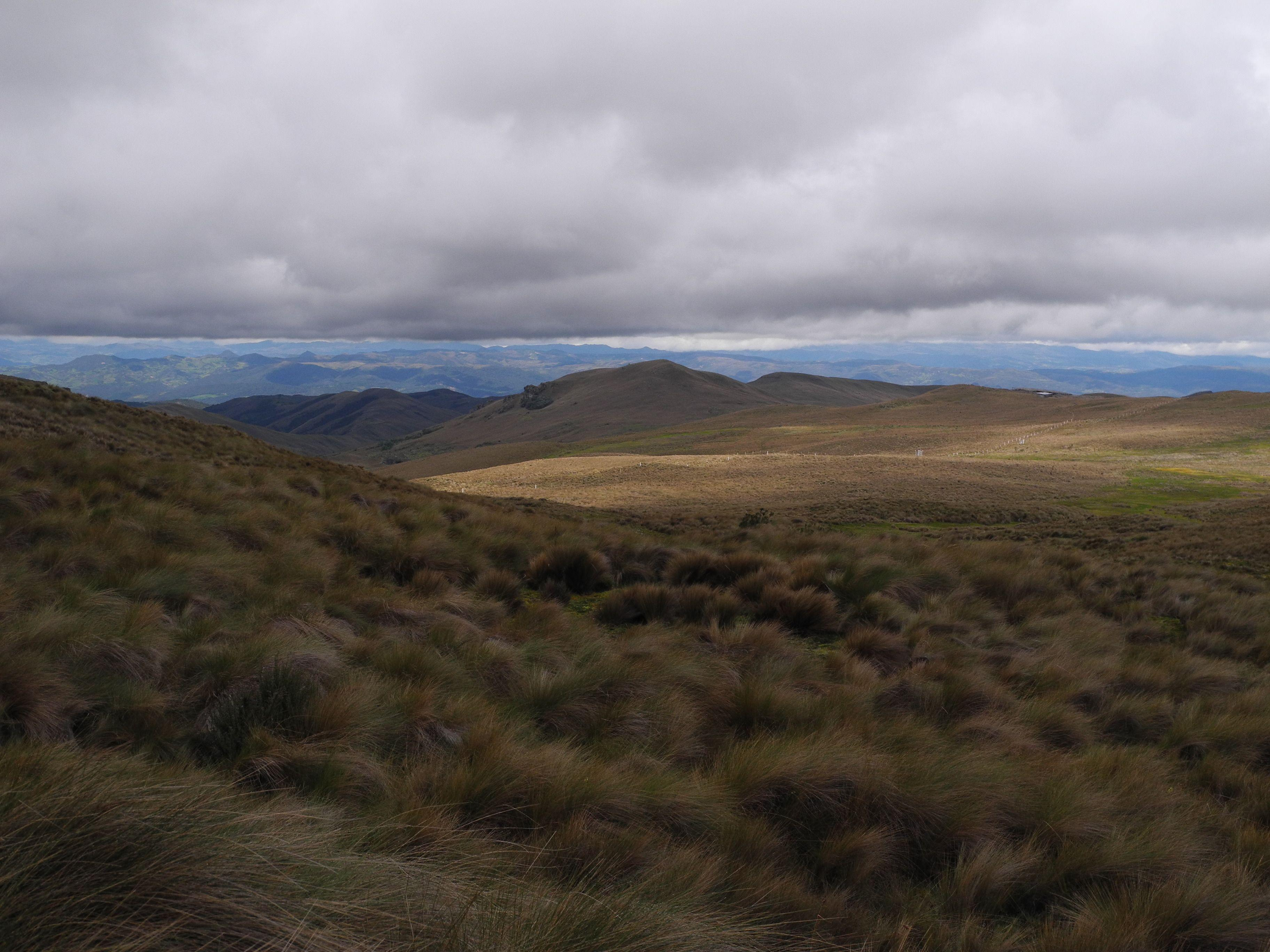 High altitude wetlands in the area of Kimsacocha, province of Azuay