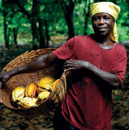 Ghana cocoa harvest